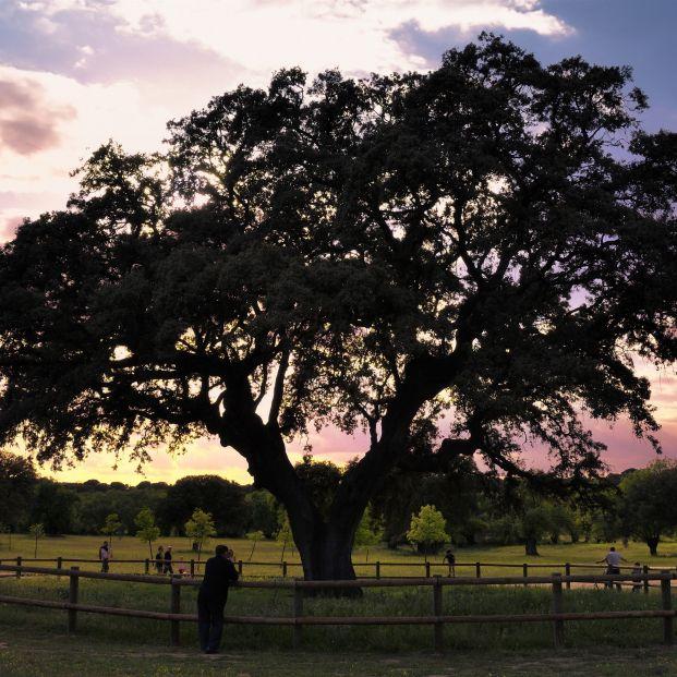 España está llena de numerosos árboles monumentales