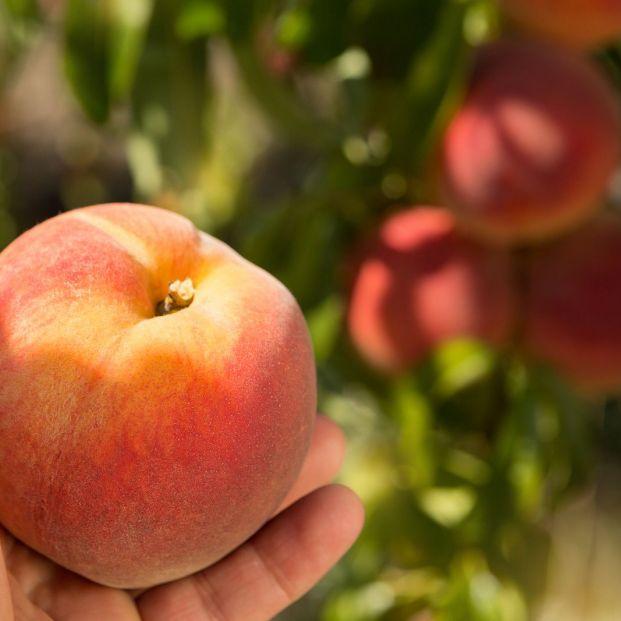 El veto ruso a frutas y hortalizas españolas ya dura 6 años