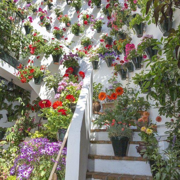 Visita los Patios de Córdoba… sin salir de casa