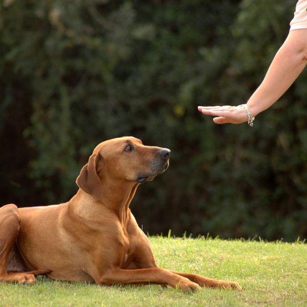 Los perros reflejan el estrés de sus dueños
