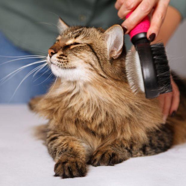 Cuidar el pelo y la piel de nuestras mascota (bigstock)