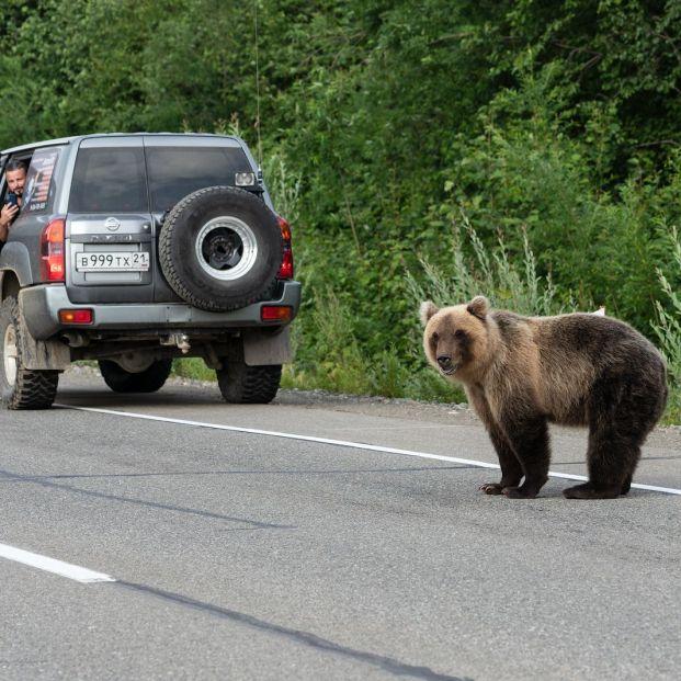 Cómo actuar si te encuentras con un animal en mitad de la carretera