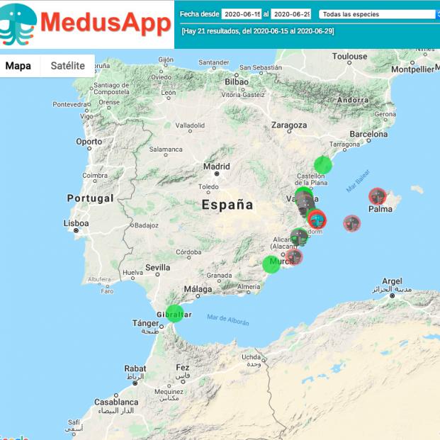 'MedusApp', la aplicación que te permite saber si hay medusas en la playa