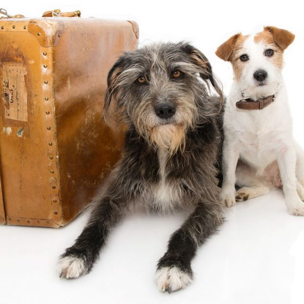 ¿Dónde puedo dejar a mi perro en vacaciones?