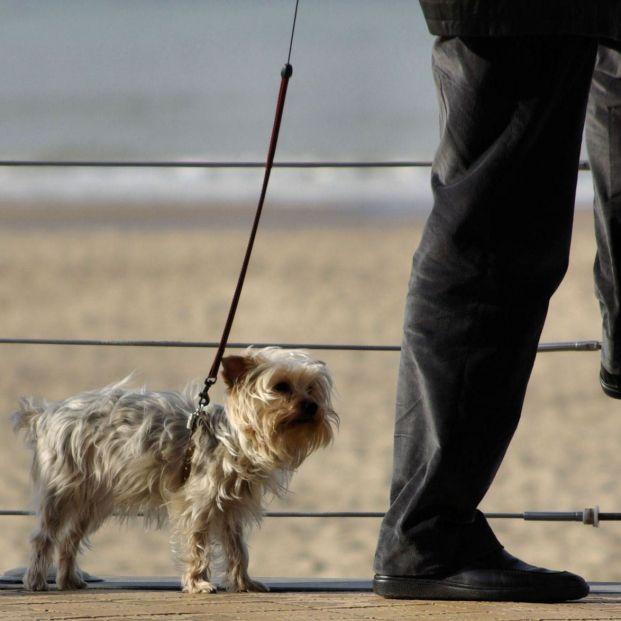 La Policía advierte: lo que no debes hacer si tu perro sufre un golpe de calor
