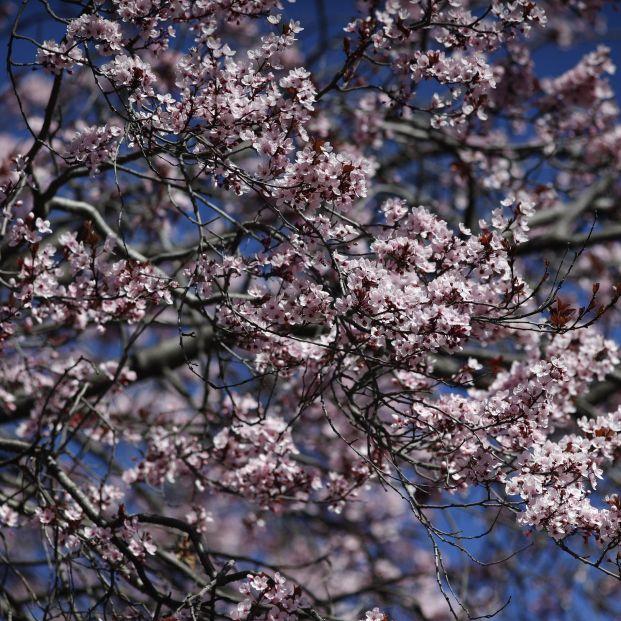 La primavera comenzará más fría de lo normal