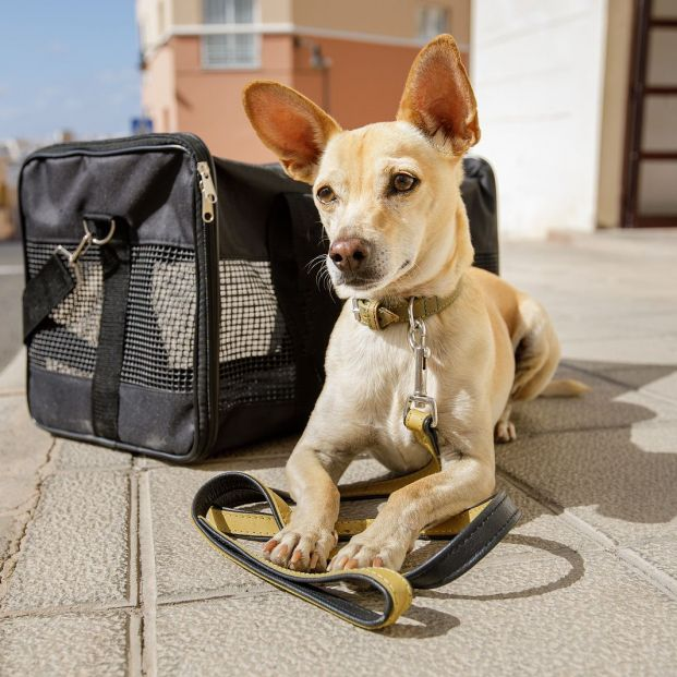 bigstock Dog In Transport Box Or Bag Re 215474731