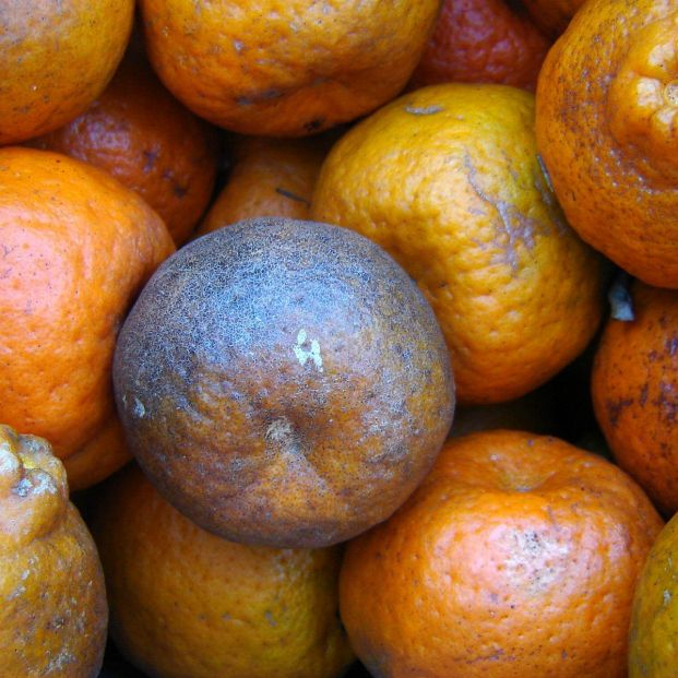 Se disparan las importaciones de cítricos infectados de Argentina y Sudáfrica