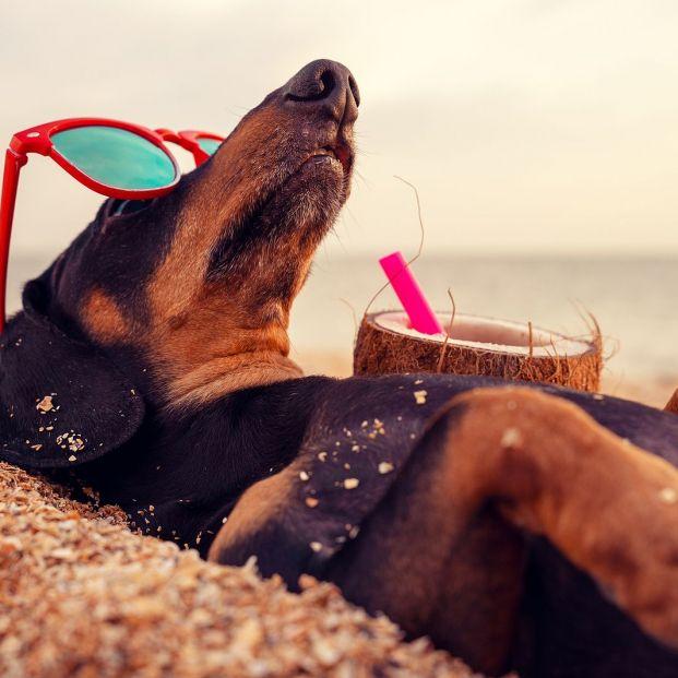 ¿Nunca te separas de tu mascota? Estas son las mejores playas para perros en España
