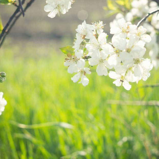 Llega la primavera (bigstock)