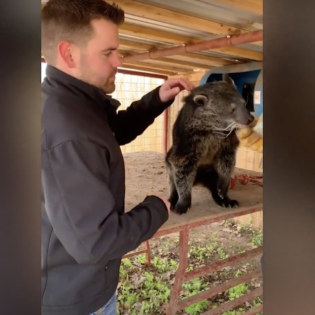 El doctor Joren Whitley, un talentoso quiropráctico de animales, que se ha hecho viral en TikTok