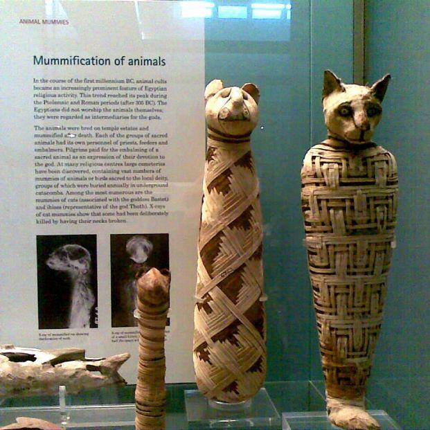 Momias de animales del antiguo Egipto 'reviven' gracias al escaneo 3D.