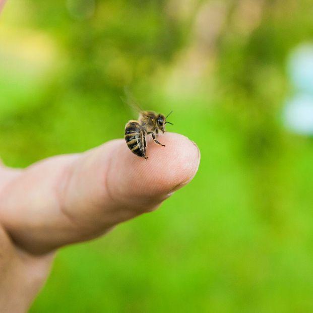 Veneno de abeja, ¿la nueva terapia contra el cáncer de mama?