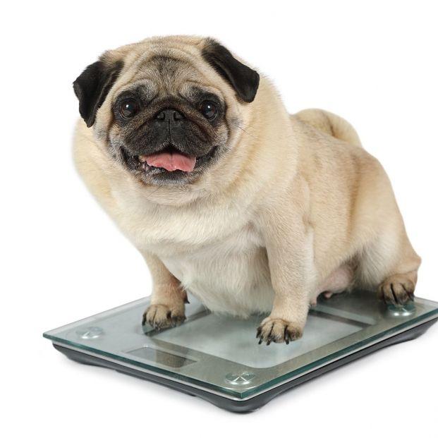 ¿Tienes que poner a tu perro a dieta?