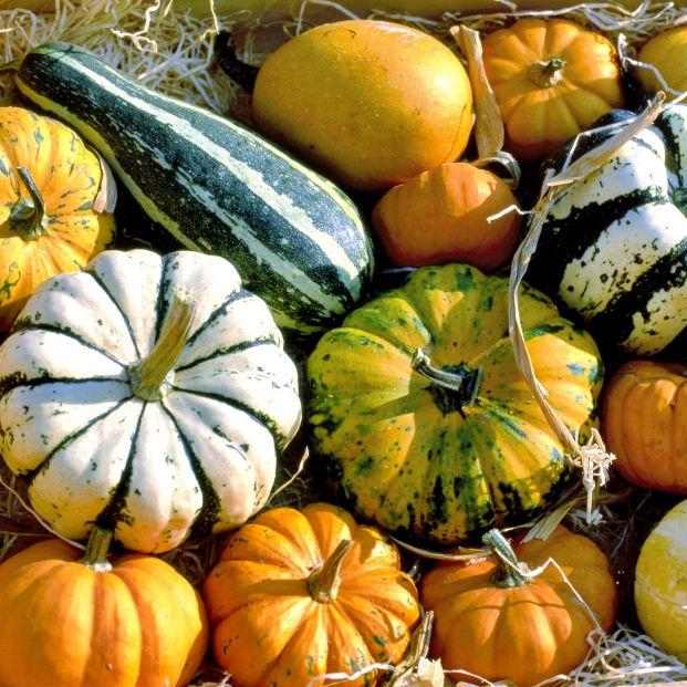 Llega el otoño y estas son las verduras de temporada