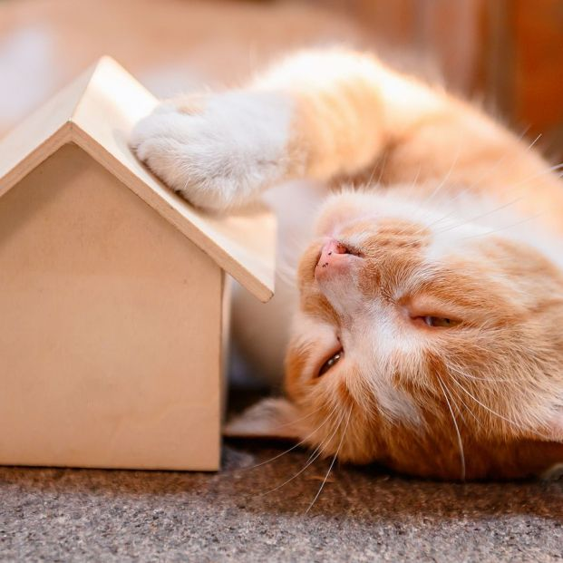 ¿Vas a tener un gato? Prepara tu casa para recibirlo