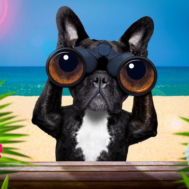 Estas son las razones por las que tu perro mira fijamente al infinito