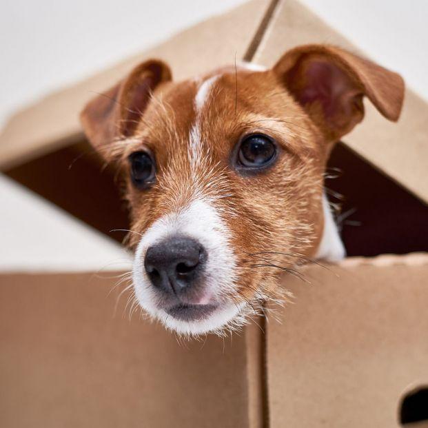 ¿Quieres tener un perro? Aspectos a valorar antes de dar el paso
