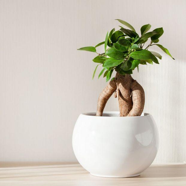 ¿Quieres llenar de naturaleza tu hogar pero no tienes tiempo? Cuatro plantas súper fáciles de cuidar (big stock)