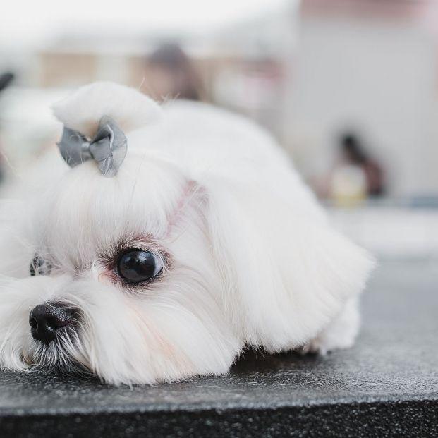 Así afecta el cambio de estación a tu mascota, según los científicos