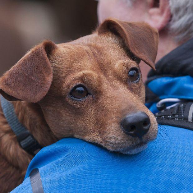 Los beneficios de conectar emocionalmente con los perros