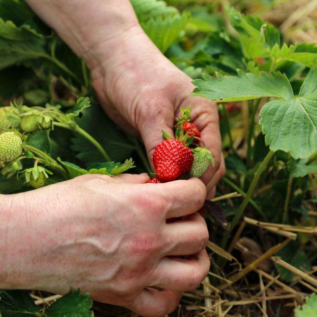 Fruta de temporada de primavera (bigstock)