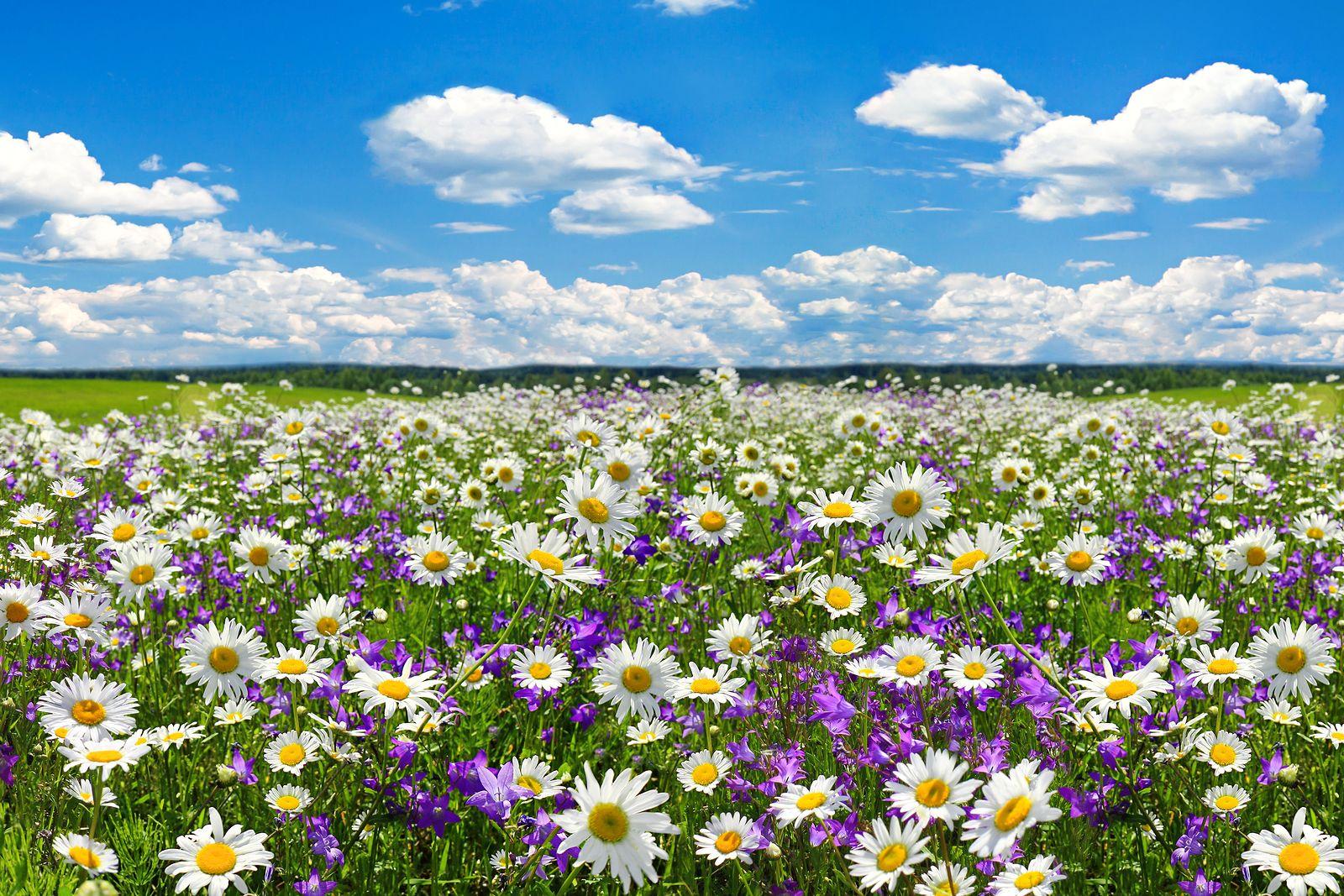 Qué efectos provoca la primavera en los mayores?