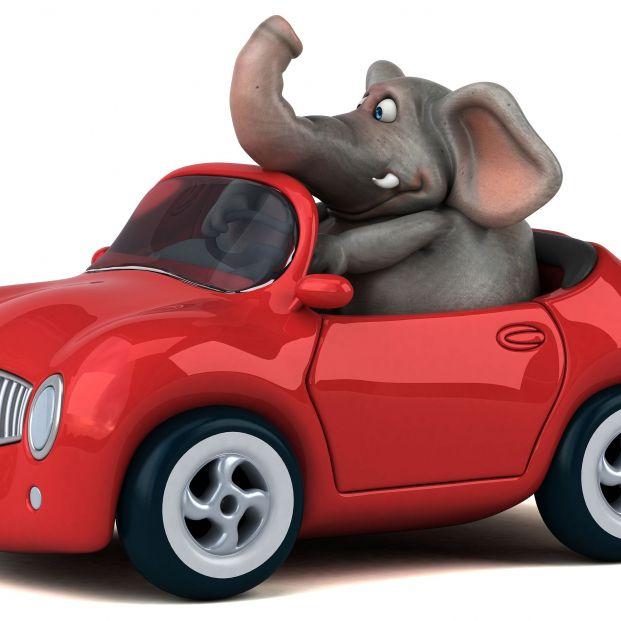 ¿Sabes qué es el efecto elefante? La DGT comienza a concienciar sobre él