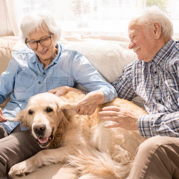 En España una de cada tres personas mayores convive con una mascota, son 2,9 millones en total (Bigstock)