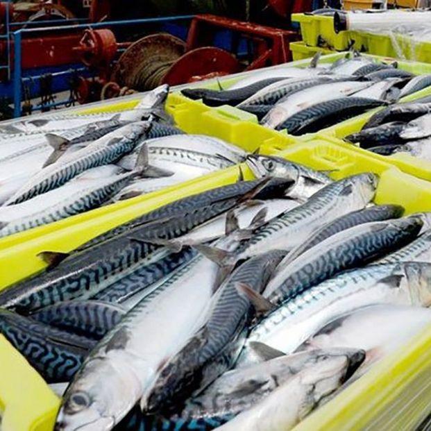 Triple acuerdo de Carrefour para apoyar al sector pesquero español