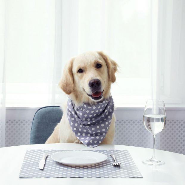 ¿Por qué los perros no deben comer lo mismo que nosotros?