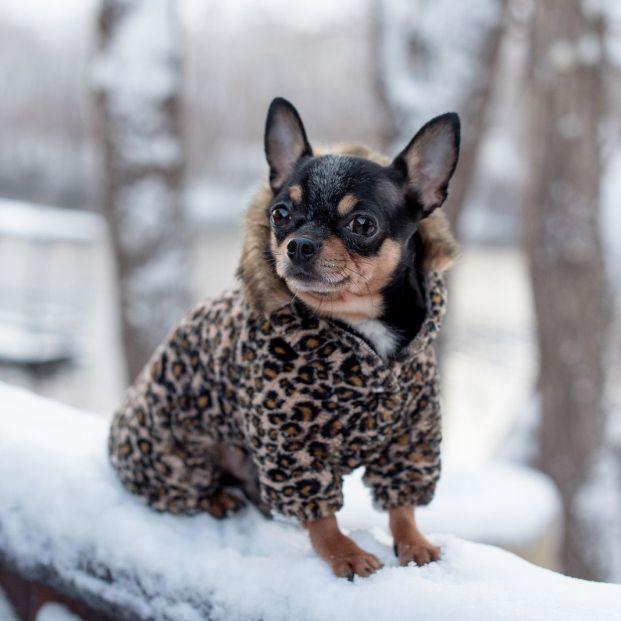 ¿Debo abrigar a mi perro si hace frío?