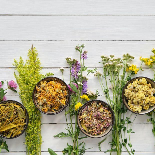 Plantas medicinales para el resfriado
