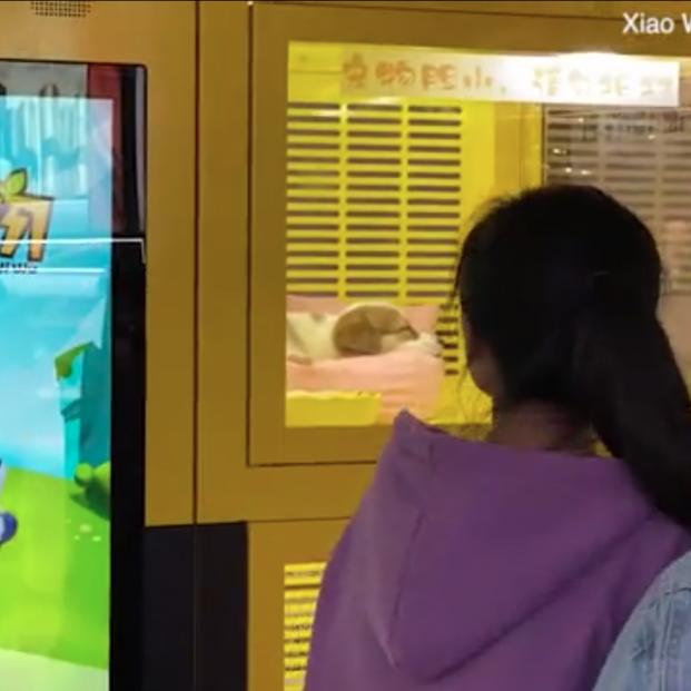 La macabra máquina expendedora de cachorros de gatos y perros en un centro comercial