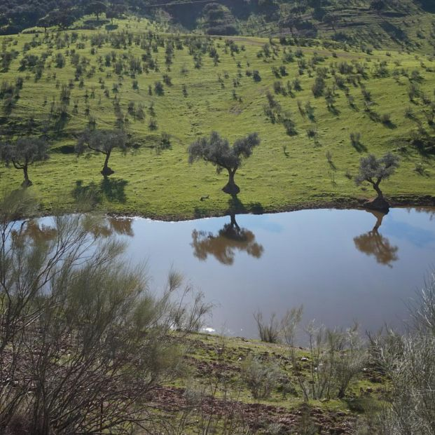 Visita la Sierra de Aracena, una escapada a la naturaleza cerca de Sevilla