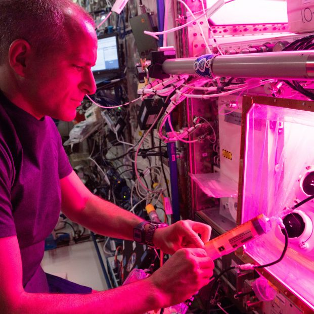 Astronaut David Saint Jacques conducts botany research