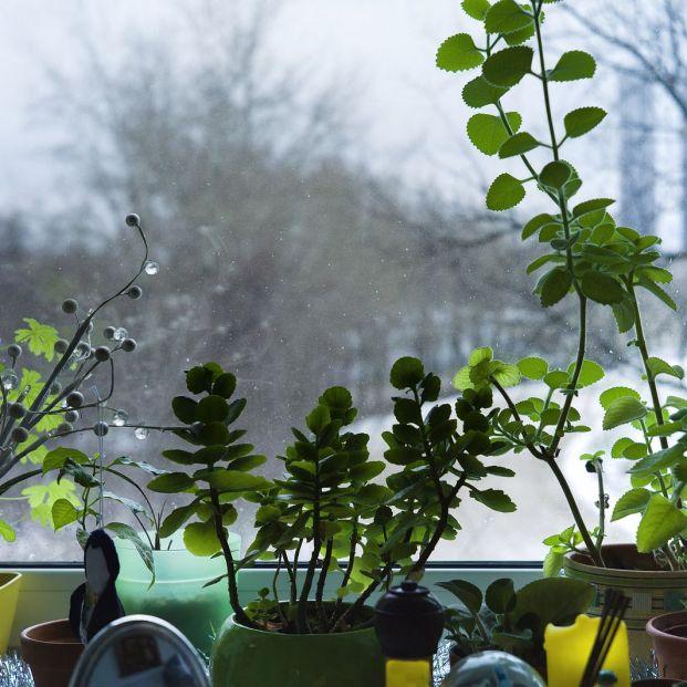 Cuidados necesarios de las plantas de interior para que superen el invierno