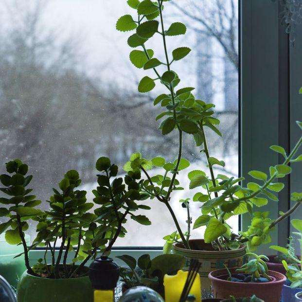 Las mejores plantas para purificar el aire de casa