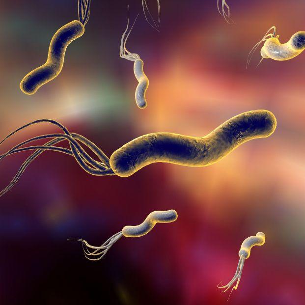 La bacteria Helicobacter pylori (bigstock)