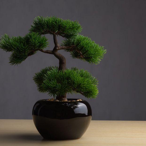 ¿Te han regalado un bonsái y no sabes cómo cuidarlo? (big stock)