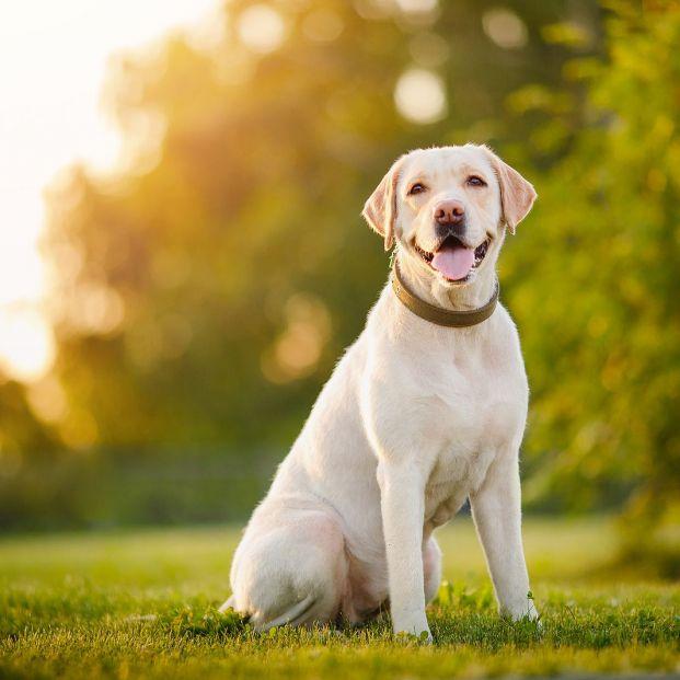 ¿Se puede tener un perro en un piso? Estas son las razas que mejor se adaptan. Foto: Bigstock