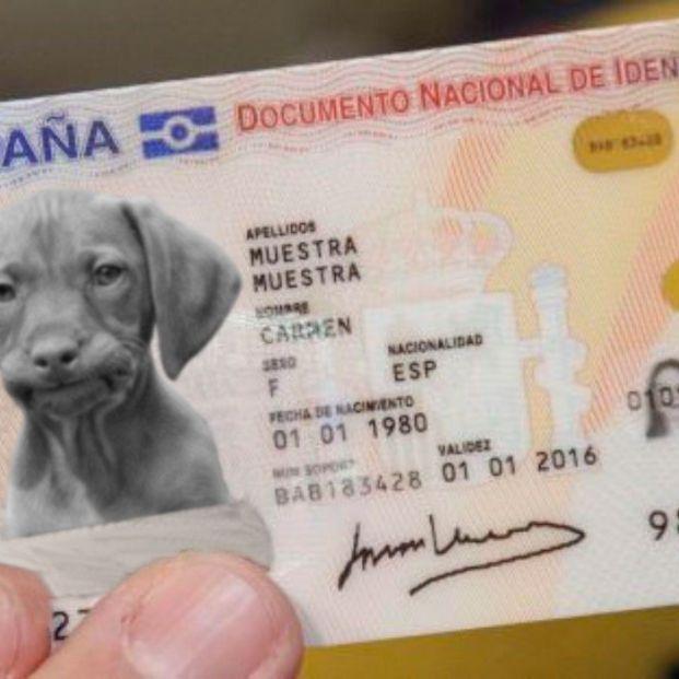 Así es el DNI para animales de compañía que el Gobierno hará obligatorio