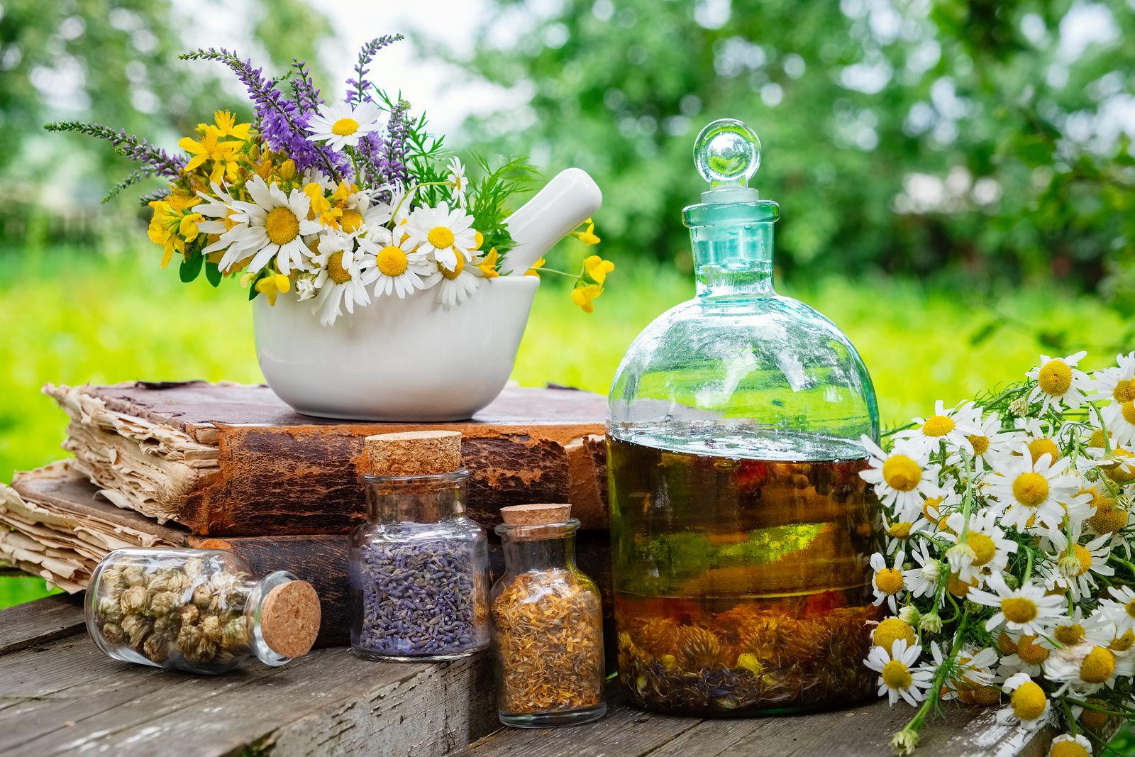 Te gustaría saber cómo cultivar tus plantas culinarias?