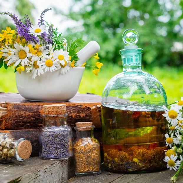 ¿Te gustaría saber cómo cultivar tus plantas culinarias?
