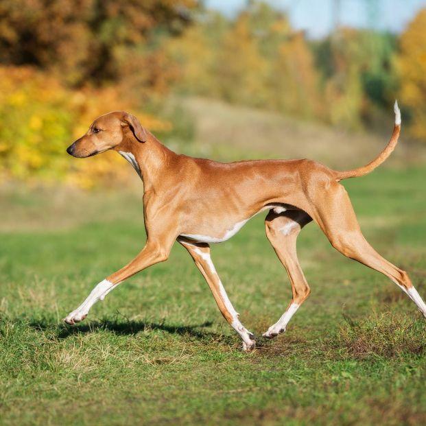 ¿Es mejor un perro mestizo o de raza? Pros y contras Foto:bigstock