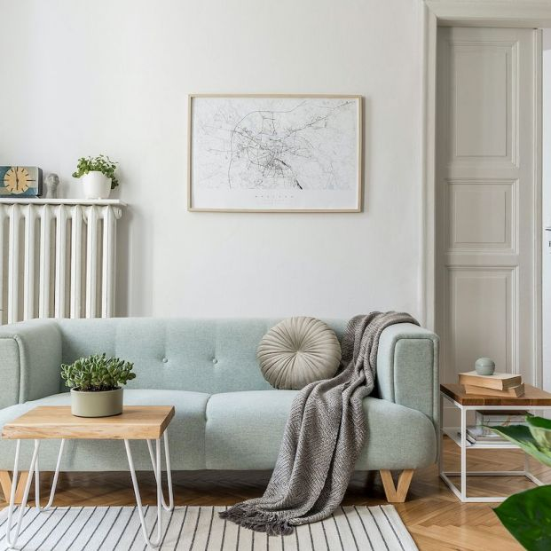 Limpia el aire de tu hogar con estas plantas