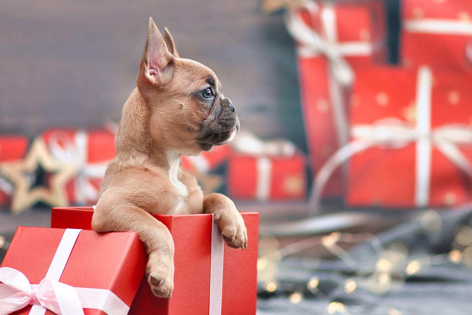 Quiero regalar un perro