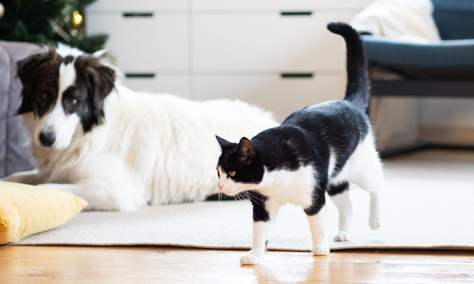 Cómo eliminar pelos de perro o gato en casa