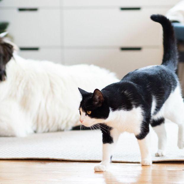 Unfehlbare Tricks, um Katzen- oder Hundehaare zu Hause zu entfernen