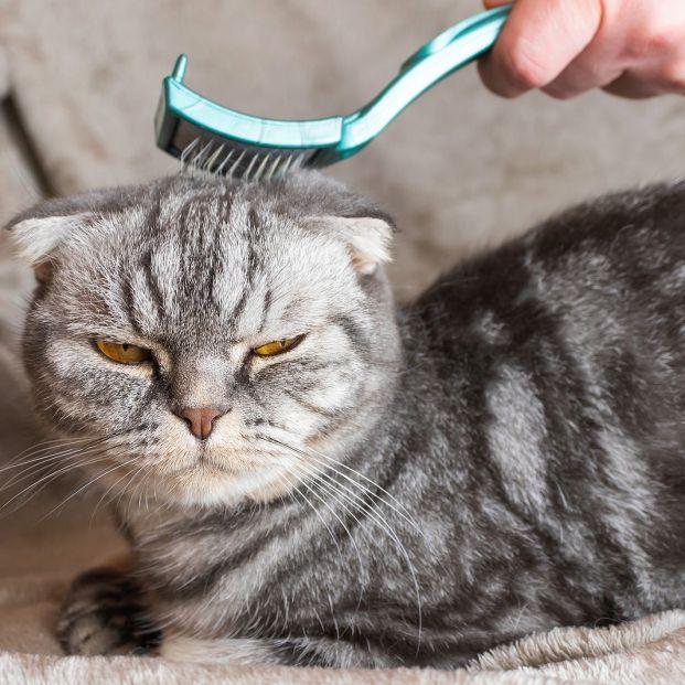 Trucos para eliminar los pelos de perro o gato en casa